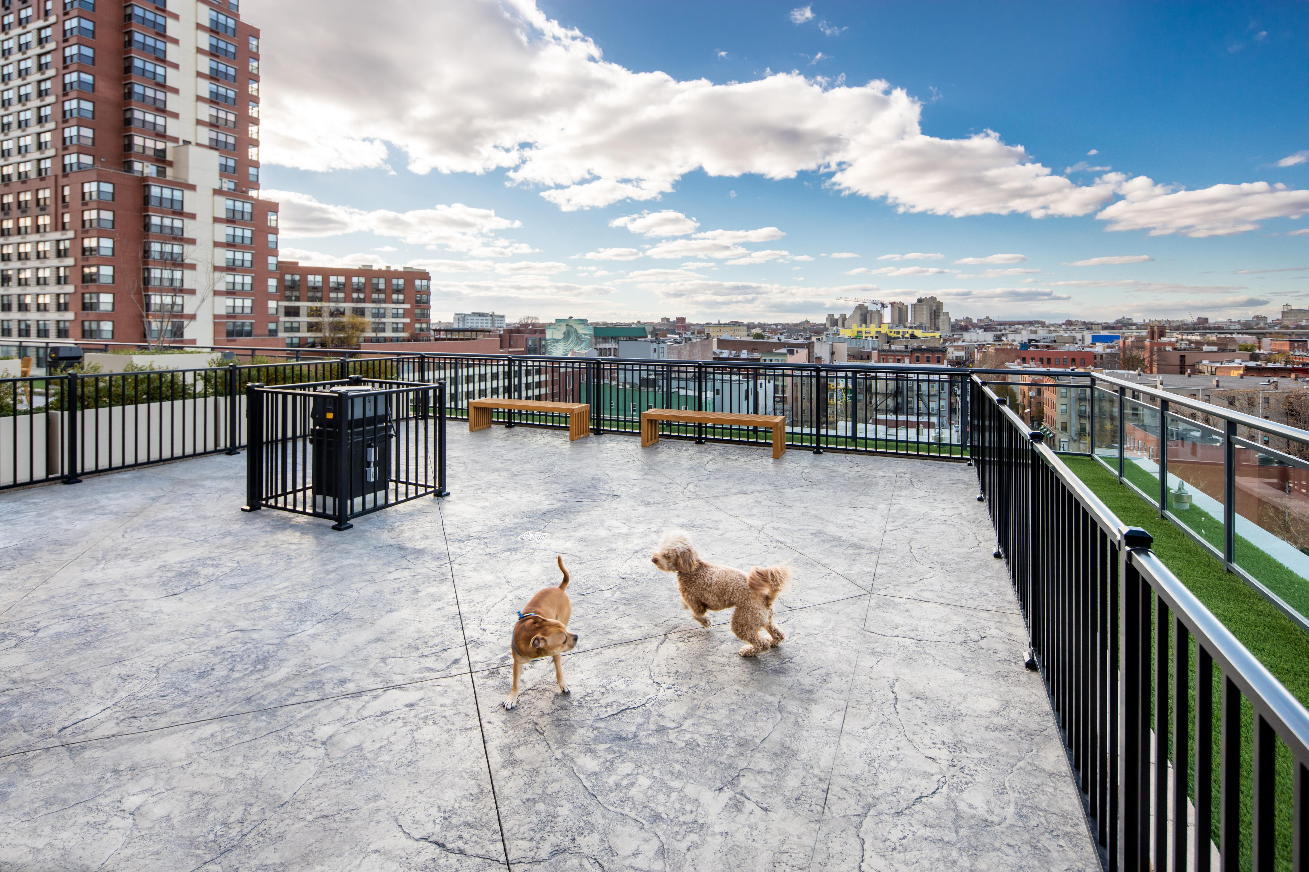 Two dogs playing on a rooftop terrace of an apartment building.