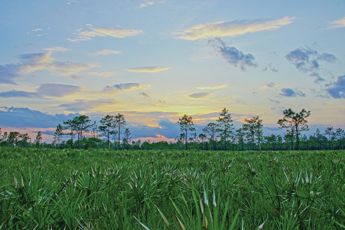 Beautiful natural landscape in central Florida